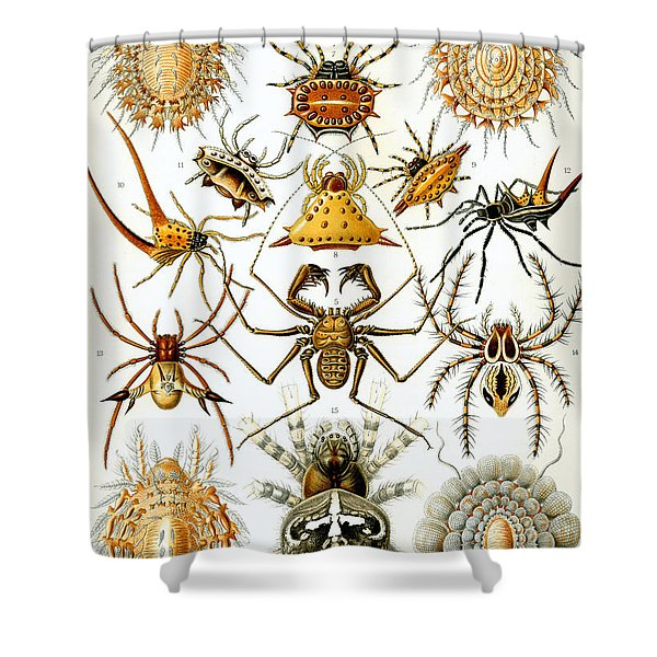 Arachnida Shower Curtain by Nomad Art And  Design
