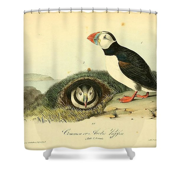 Arctic Puffin Shower Curtain by Philip Ralley