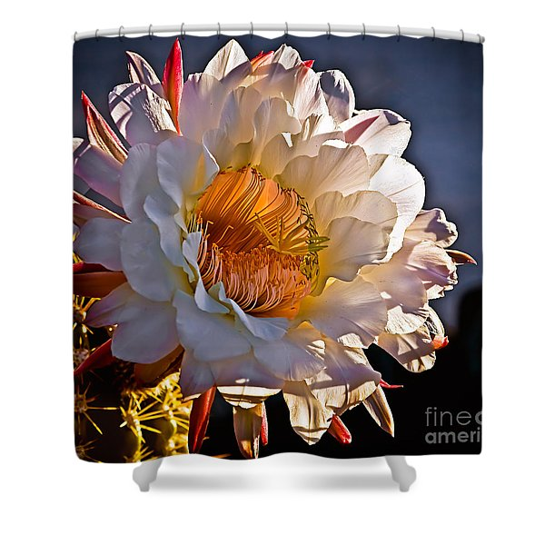 Argentine Giant II Shower Curtain by Robert Bales