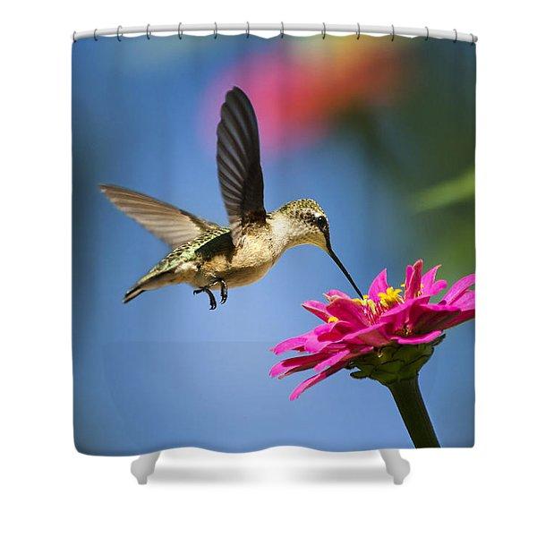 Art of Hummingbird Flight Shower Curtain by Christina Rollo