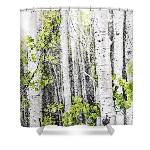 Aspen grove Shower Curtain by Elena Elisseeva