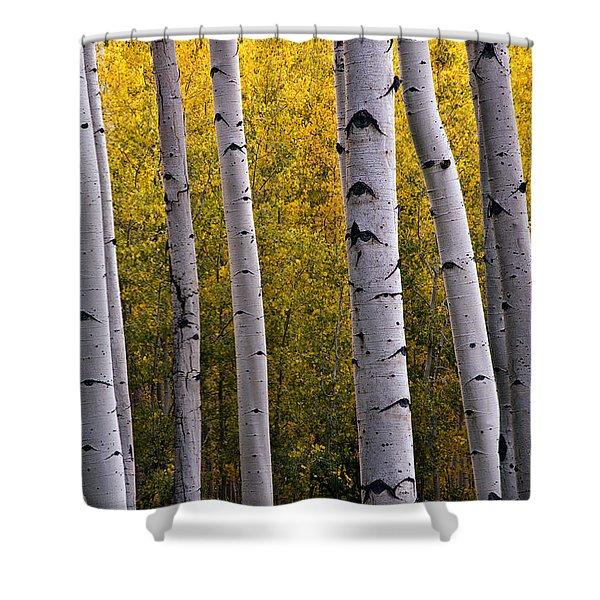 Aspen Light 2 Shower Curtain by Dave Dilli