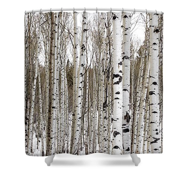 Aspens In Winter Panorama - Colorado Shower Curtain by Brian Harig