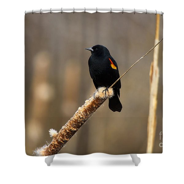 At Rest Shower Curtain by Mike  Dawson
