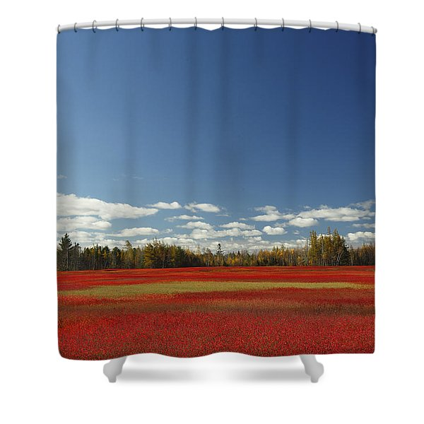 Autumn Blueberry Field Maine Shower Curtain by Scott Leslie