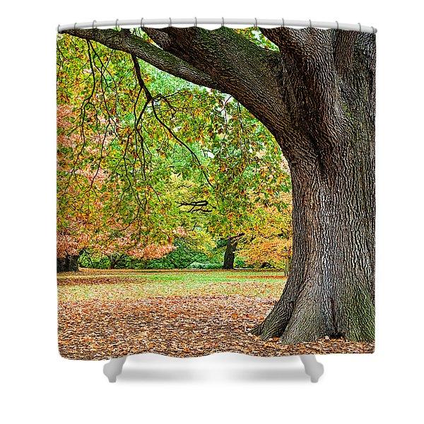 Autumn Shower Curtain by Dave Bowman