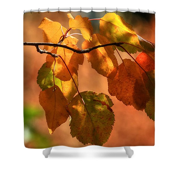 Autumn Leaves Shower Curtain by Donna Kennedy
