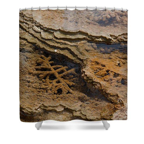 Bacterial Mat 8 Shower Curtain by Dan Hartford