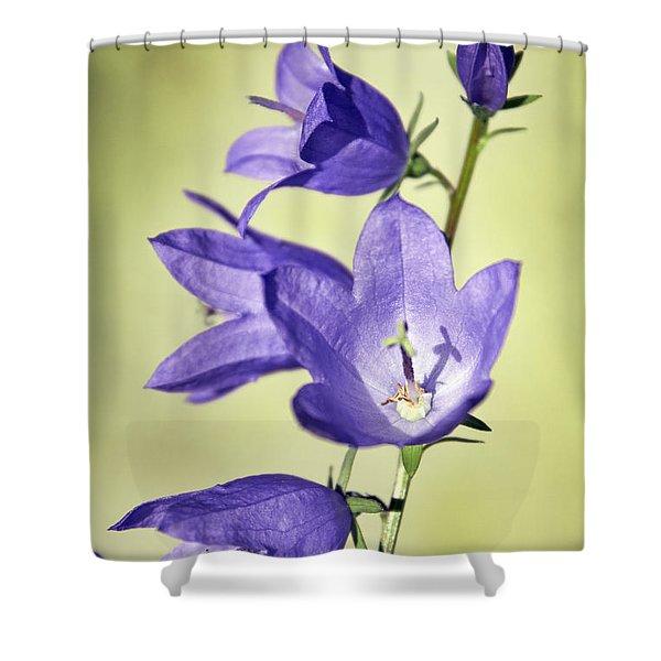 Balloon Flowers Shower Curtain by Tony Cordoza