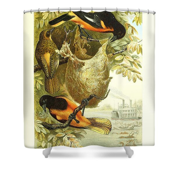 Baltimore Orioles Shower Curtain by Unknown Artist