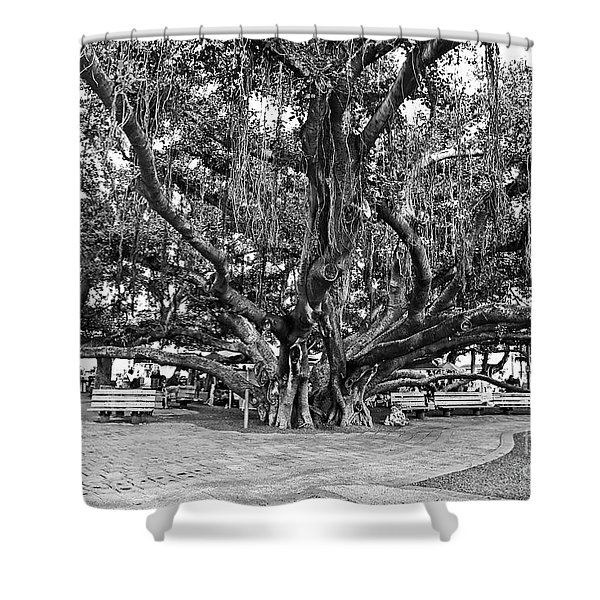 Banyan Tree Shower Curtain by Scott Pellegrin