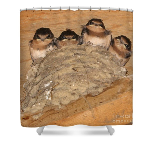 Barn Swallow Chicks 2 Shower Curtain by Conni Schaftenaar Elderberry Blossom Art
