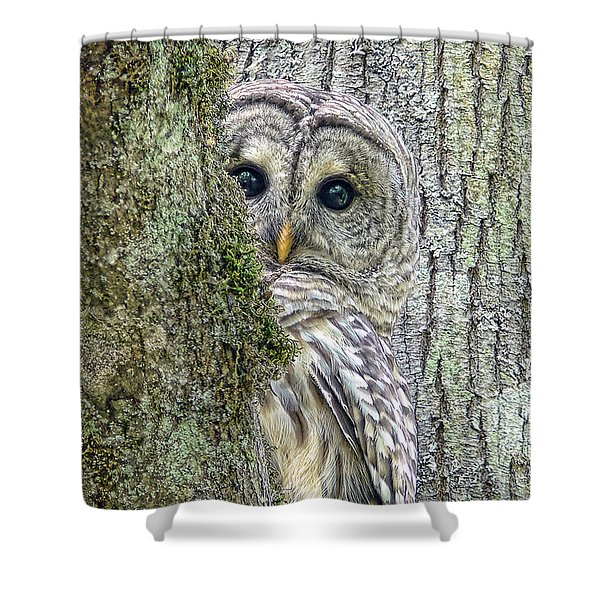 Barred Owl Peek A Boo Shower Curtain by Jennie Marie Schell