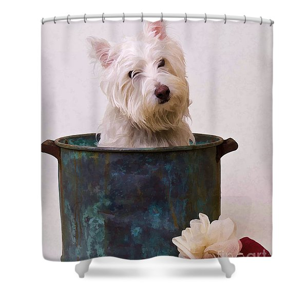 Bath Time Westie Shower Curtain by Edward Fielding