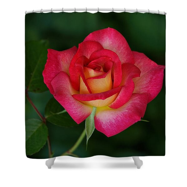 Beautiful Rose Shower Curtain by Sandy Keeton
