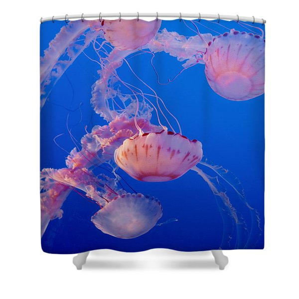 Below The Surface 3 Shower Curtain by Jack Zulli