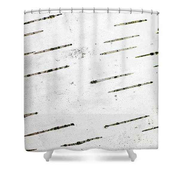 Birch Bark Shower Curtain by Steven Ralser