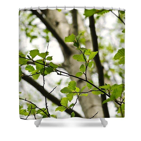 Birch Tree In Spring Shower Curtain by Elena Elisseeva