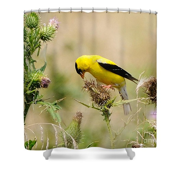 Bird -gold Finch Feasting  Shower Curtain by Paul Ward