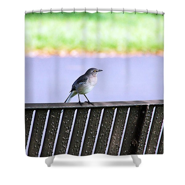 Bird On Bench Shower Curtain by Aimee L Maher Photography and Art