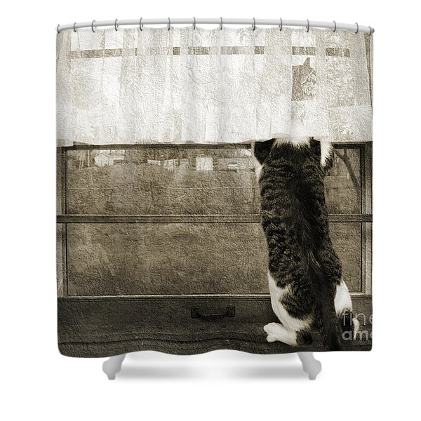 Bird Watching Kitty Cat Bw Shower Curtain by Andee Design