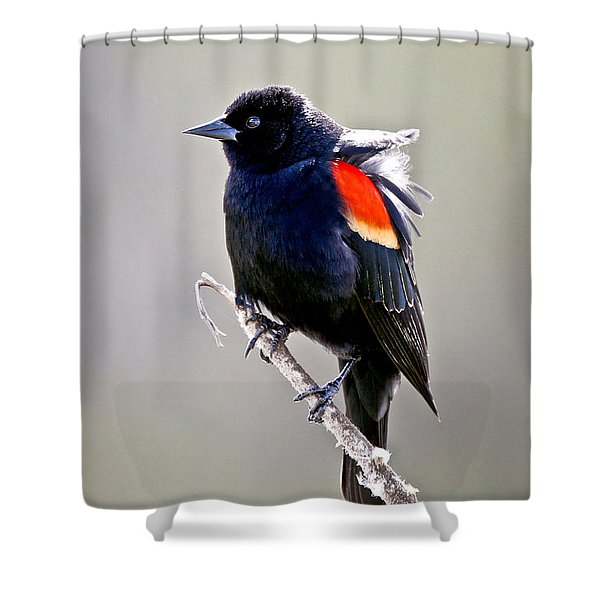 Black Bird Shower Curtain by Athena Mckinzie