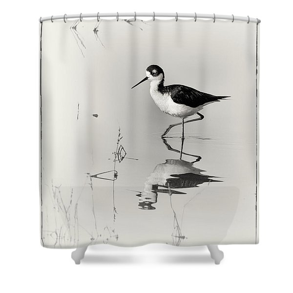 Black-necked Stilt at Carson Lake Wetlands Shower Curtain by Priscilla Burgers