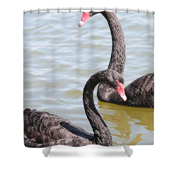 Black Swan Pair Shower Curtain by Carol Groenen