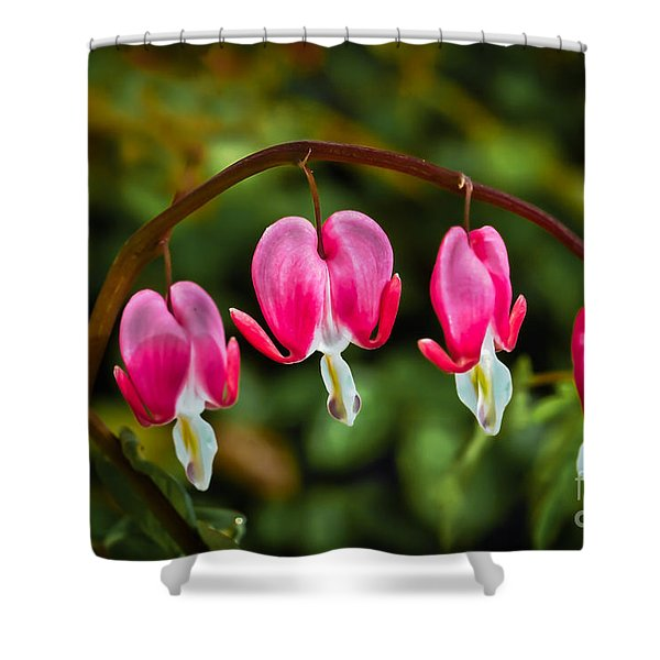 Bleeding Hearts Shower Curtain by Robert Bales
