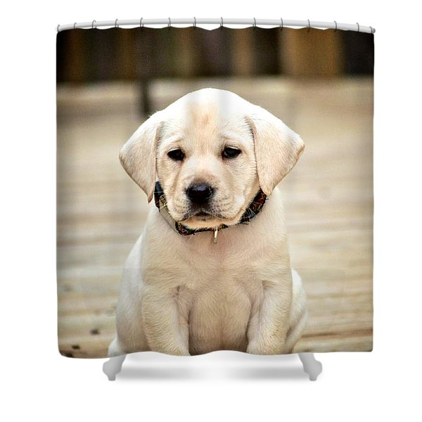 Blond Lab Pup Shower Curtain by Kristina Deane
