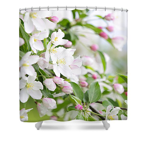 Blooming apple tree Shower Curtain by Elena Elisseeva