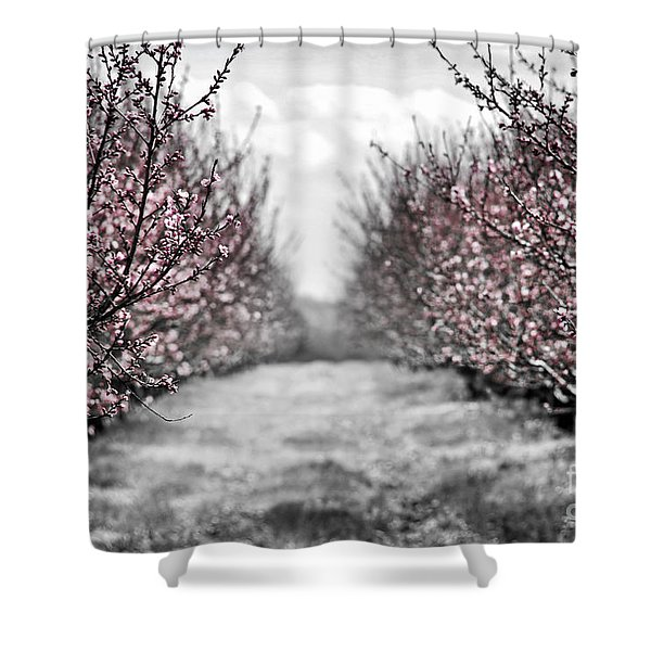Blooming peach orchard Shower Curtain by Elena Elisseeva