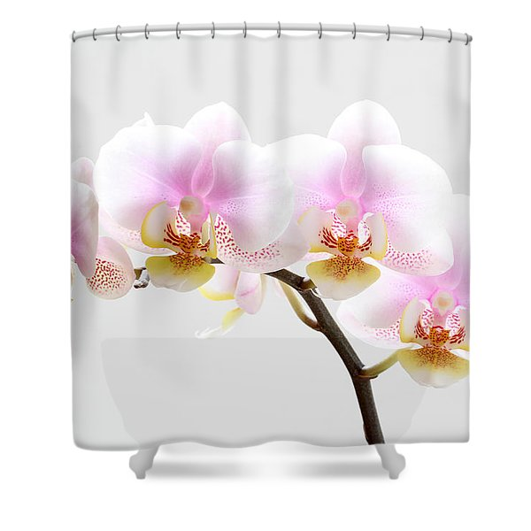 Blooms on White Shower Curtain by Juergen Roth
