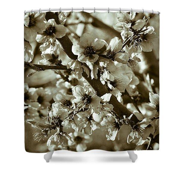 Blossoms Shower Curtain by Frank Tschakert
