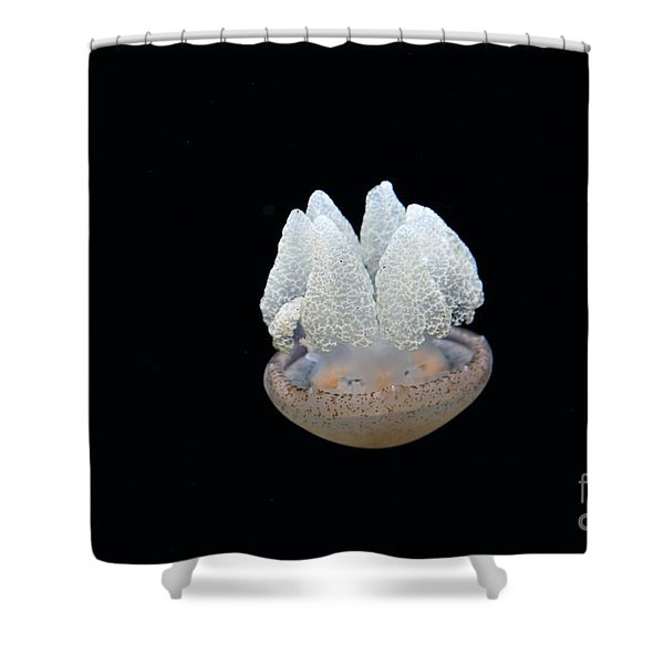 Blubber Jelly Fish 5D24960 Shower Curtain by Wingsdomain Art and Photography