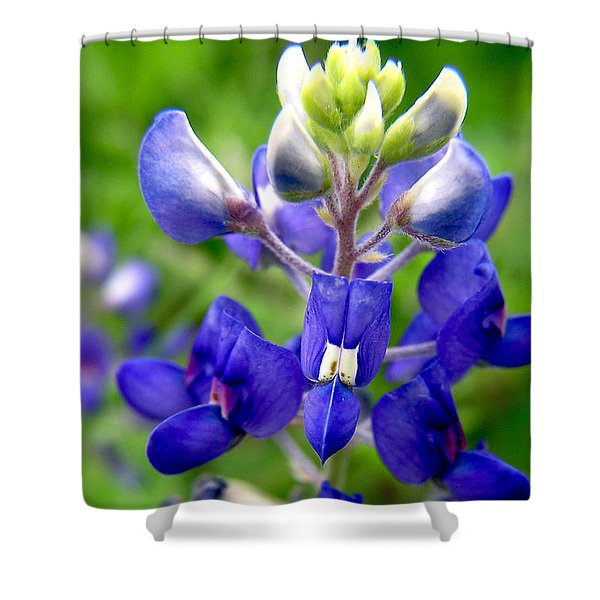 Blue Bonnet Shower Curtain by Adam Johnson