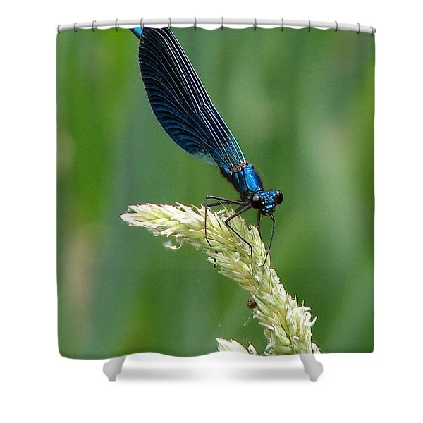Blue Damselfly Shower Curtain by Ramona Johnston