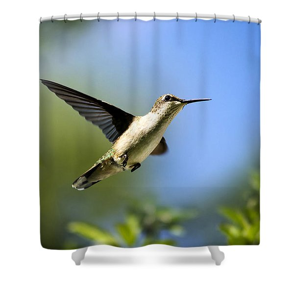 Blue Green Hummingbird Art Shower Curtain by Christina Rollo