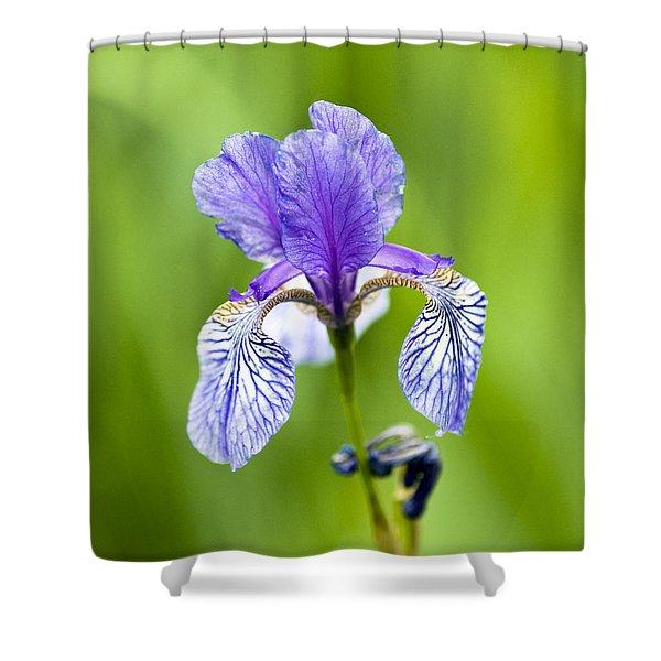 Blue Iris Shower Curtain by Frank Tschakert
