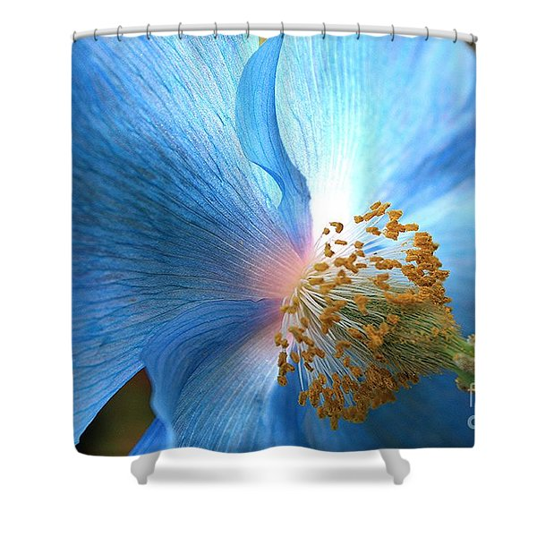 Blue Poppy Shower Curtain by Carol Groenen