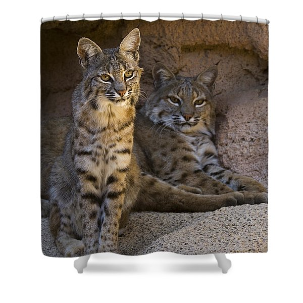 Bobcat 8 Shower Curtain by Arterra Picture Library