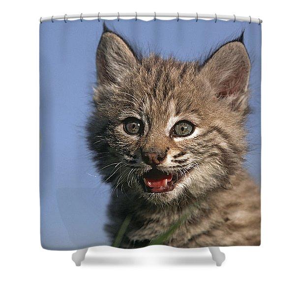 Bobcat Kitten Shower Curtain by Tim Fitzharris