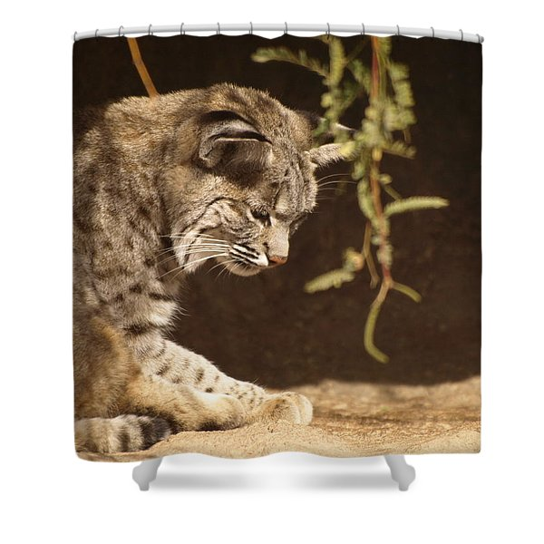 Bobcat Shower Curtain by James Peterson