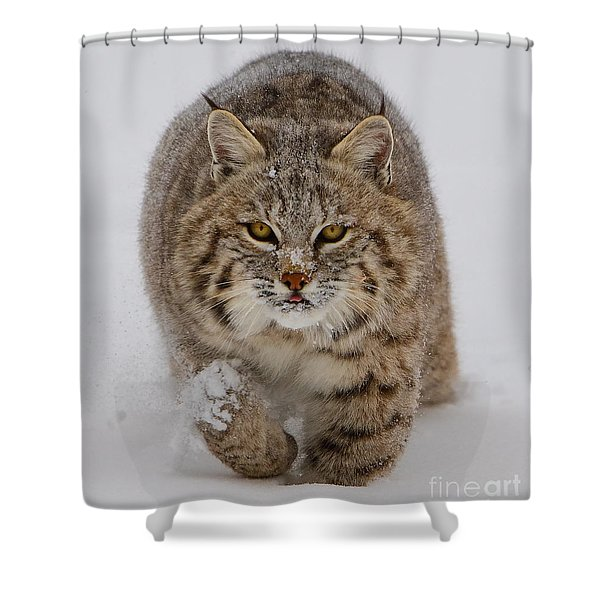 Bobcat Running Forward Shower Curtain by Jerry Fornarotto