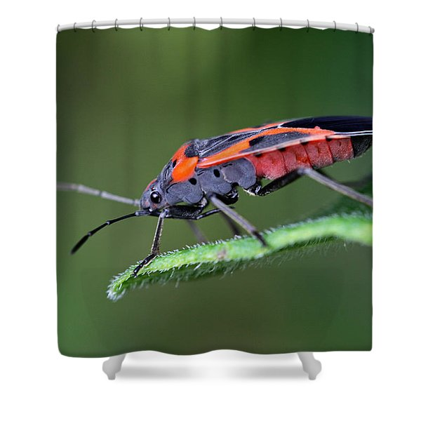 Boxelder Bug Shower Curtain by Juergen Roth