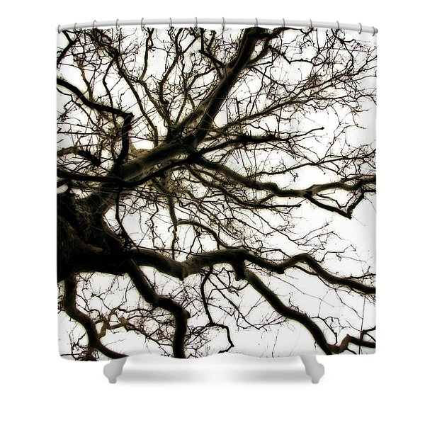 Branches Shower Curtain by Michelle Calkins