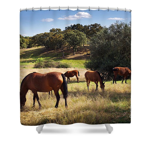 Breed Of Horses Shower Curtain by Carlos Caetano
