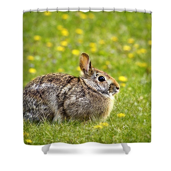 Brown Bunny In Green Grass Shower Curtain by Christina Rollo