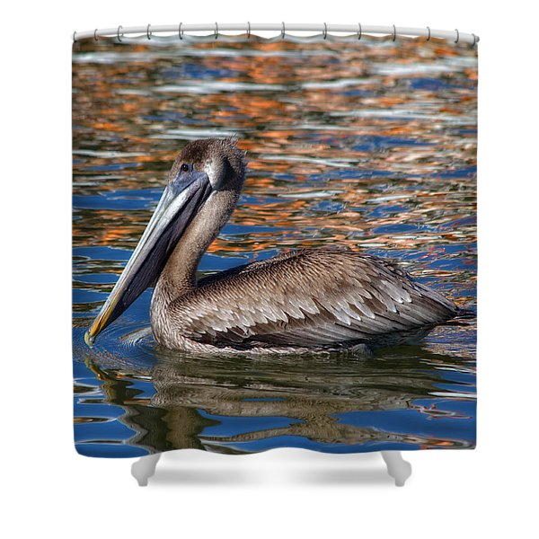 Brown Pelican - Florida Shower Curtain by Kim Hojnacki