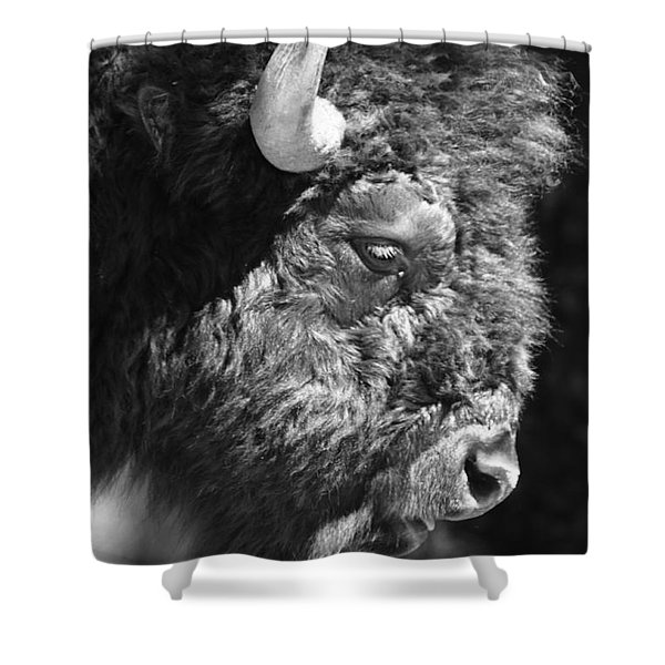 Buffalo Portrait Shower Curtain by Robert Frederick